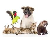 Присмотр за животными / Выгул собак и других животных